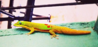 gecko outdoors