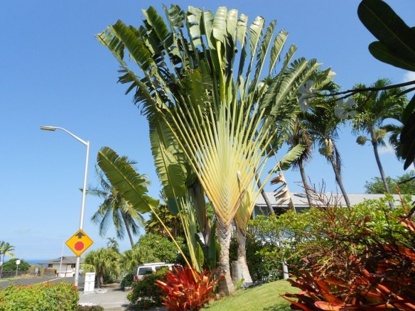 Besides the wildlife, plants in Hawaii are so unlike what we have in Spokane.