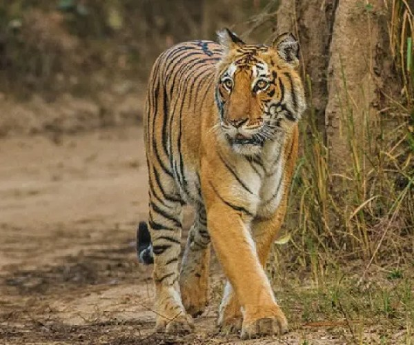 Uttarakhand Jim Corbett National Park