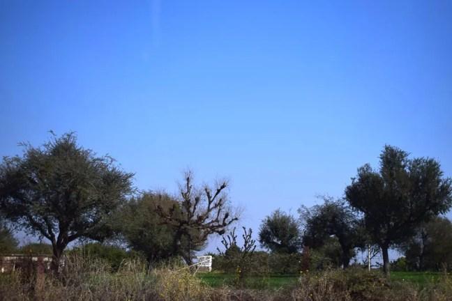 Rajasthan Vegetation