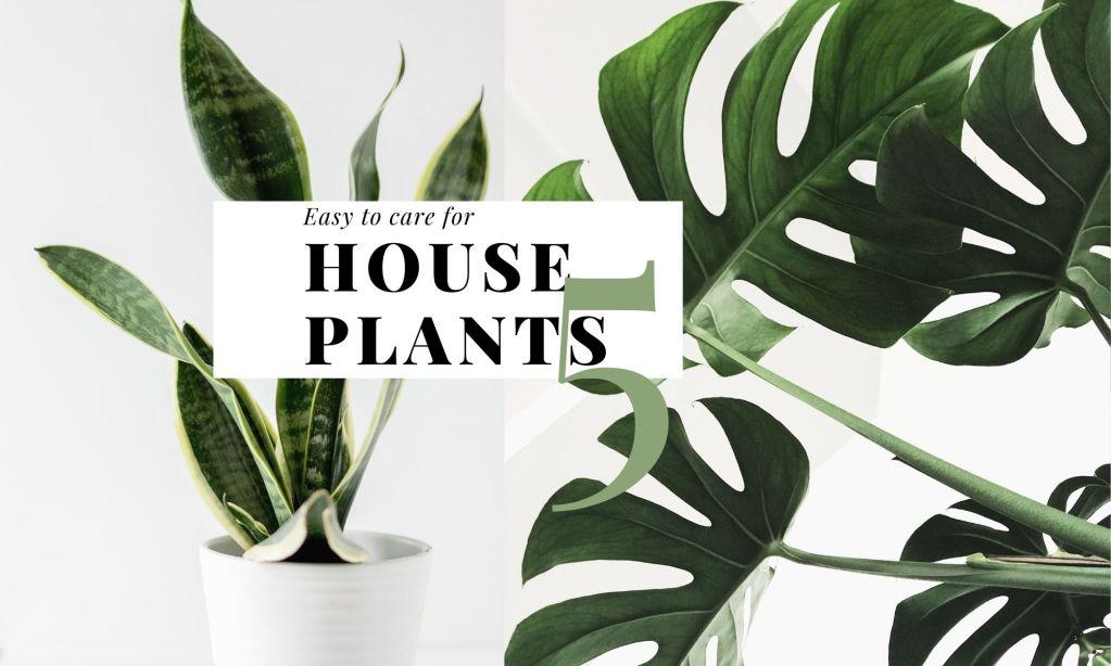 友善新手居家植栽 Easy to care for house plants