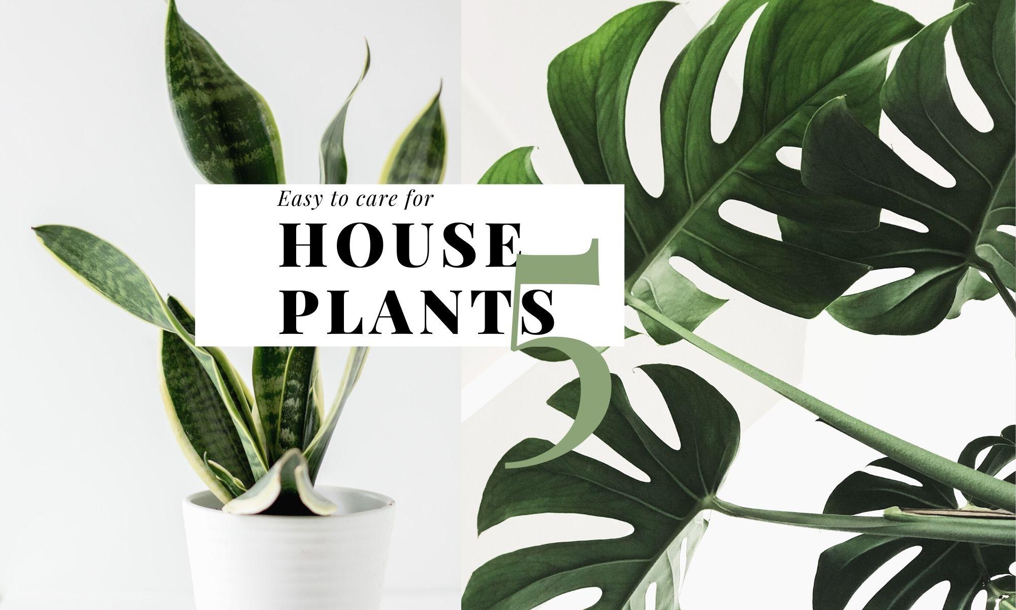 植物讓生活溫柔地堅強,友善新手家居植栽5款