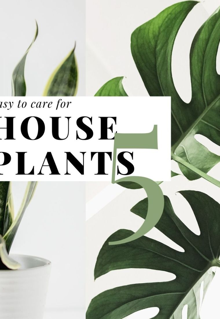 5 Easy to care for house plants, make life be gentle and strong