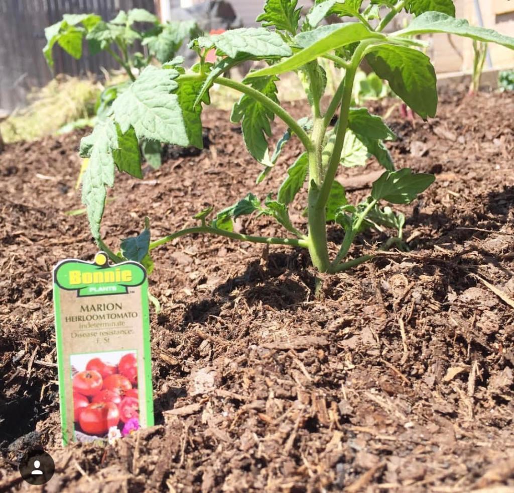 Tending Your Garden (1)