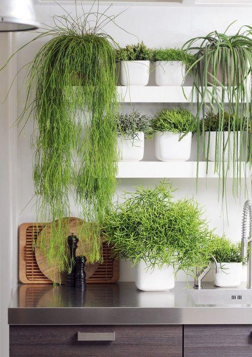 plants on a shelf in the kithcen