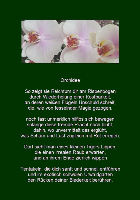 orchidee weiß geä