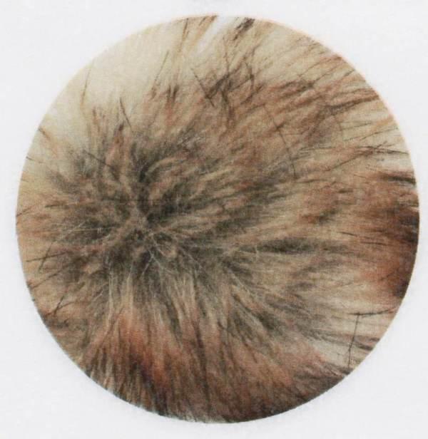 E-POM-205-wheat