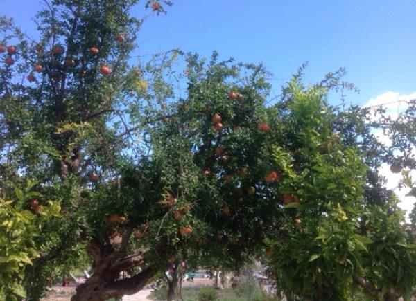 Pomagranites