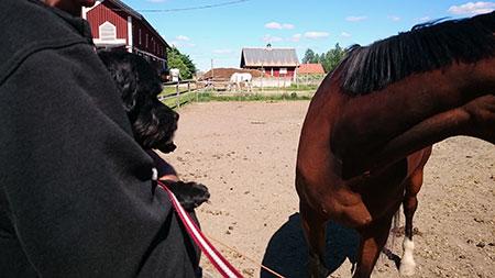 Ridning-fanta-o-häst1