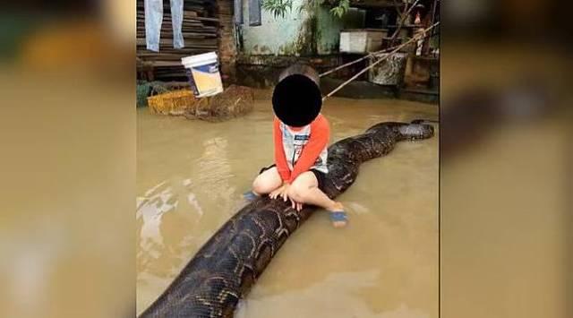 w644 18 Bocah di Vietnam Tunggangi Ular Piton Sepanjang 6 Meter ini Jadi Viral