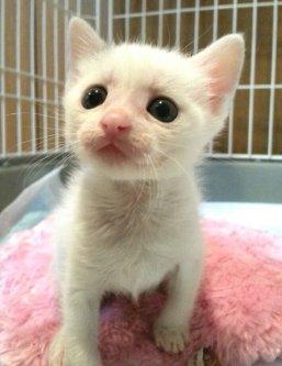 生後1ヶ月の白ちゃん。笑ってる!