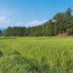 田畑や山林の相続放棄が28万人