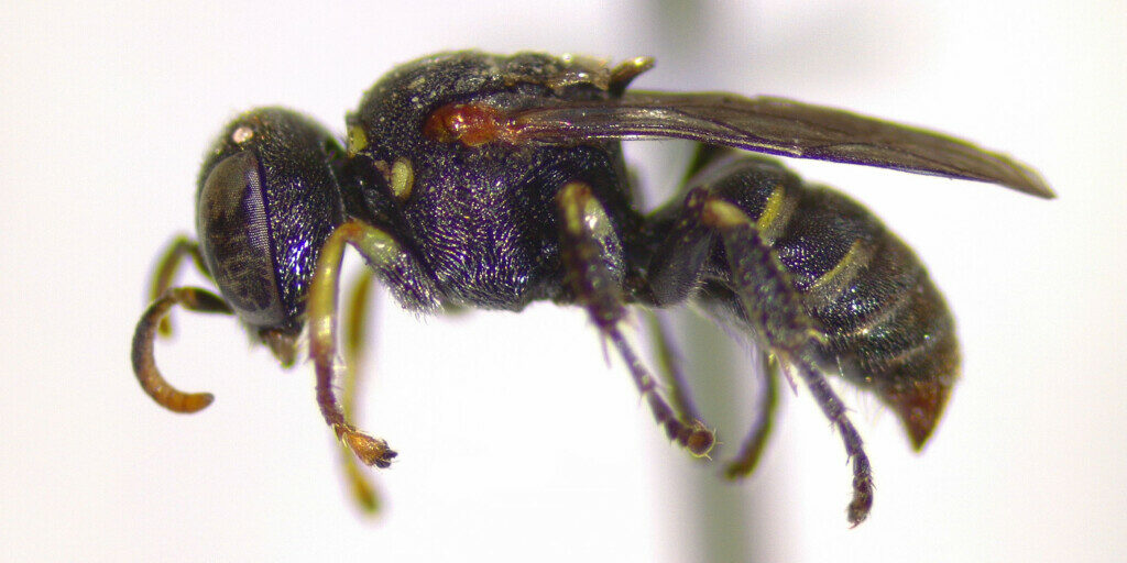 """Featured image for """"Little Wasps on the Fringes"""""""