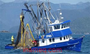 Kelebihan kapal penangkap ikan tipe purse seine