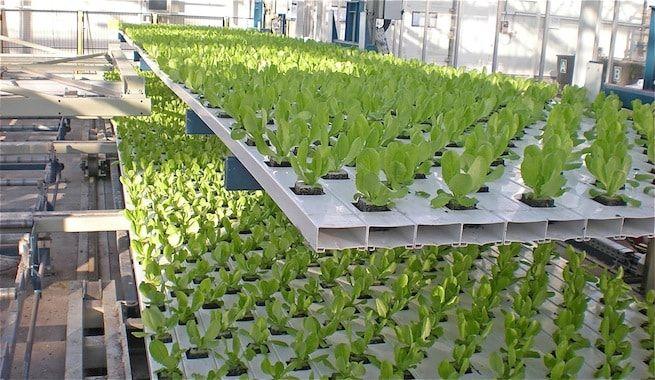 ideas-construir-jardines-hidroponicos-exterior