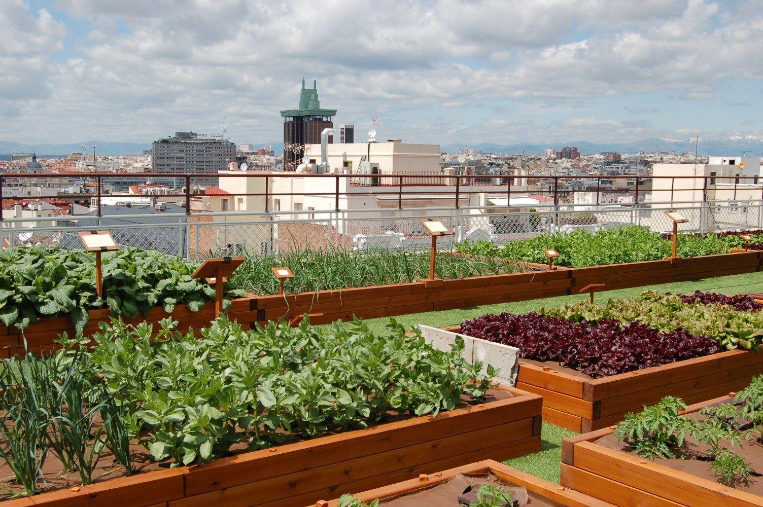 Vegetal-cubierta-beneficios
