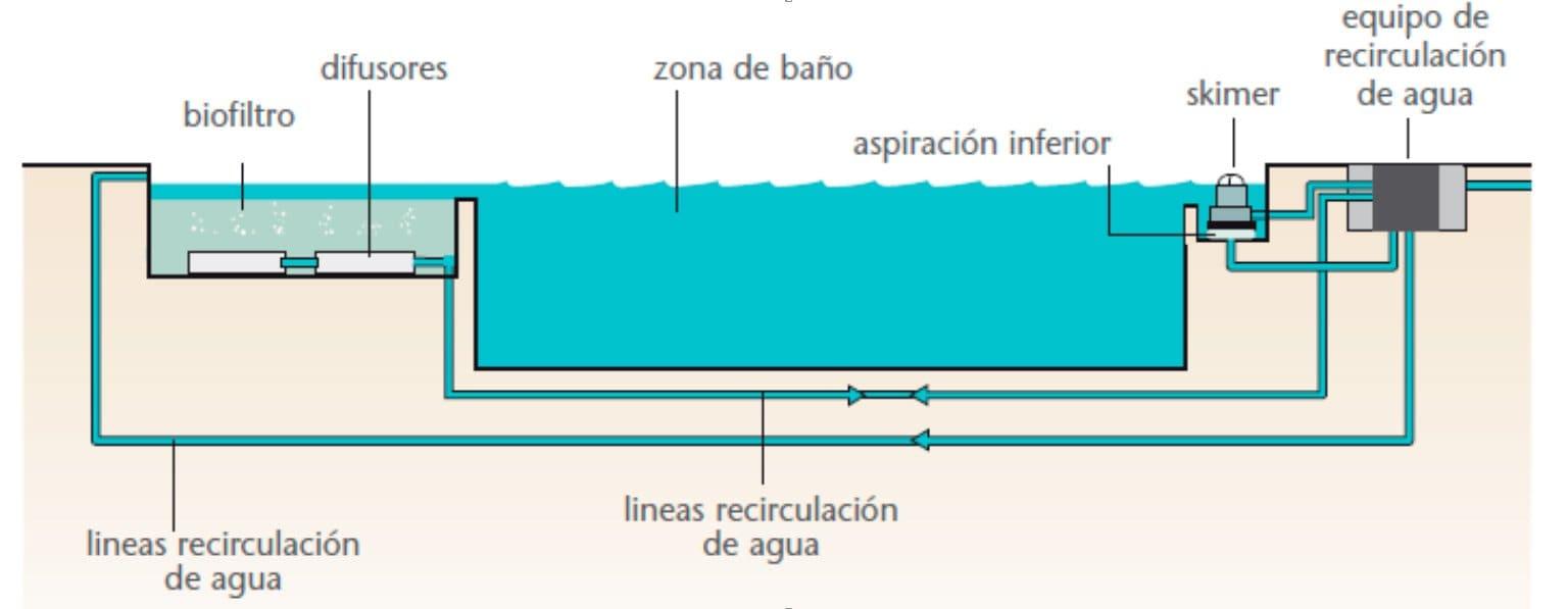 piscinas-naturales-ecologicas-funcionamiento