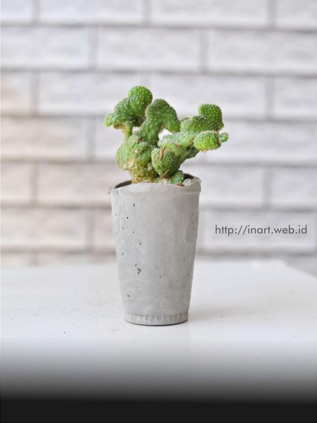 pot kaktus semen oke sip