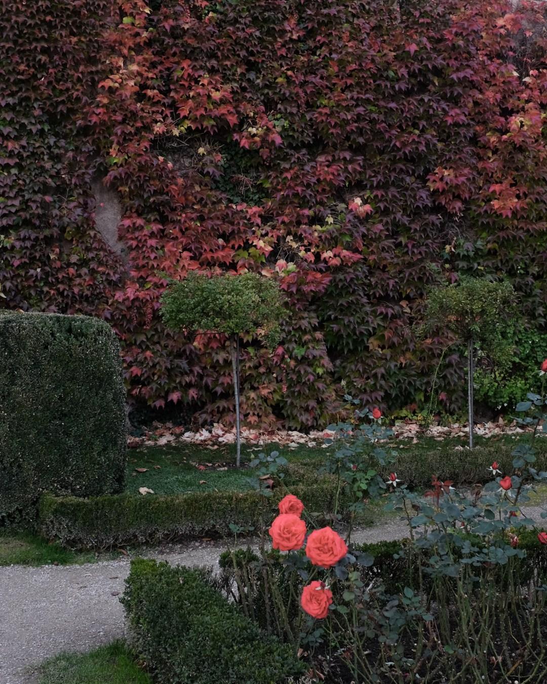 DSCF0240.mirabellgarten herbstfarben autumncolours