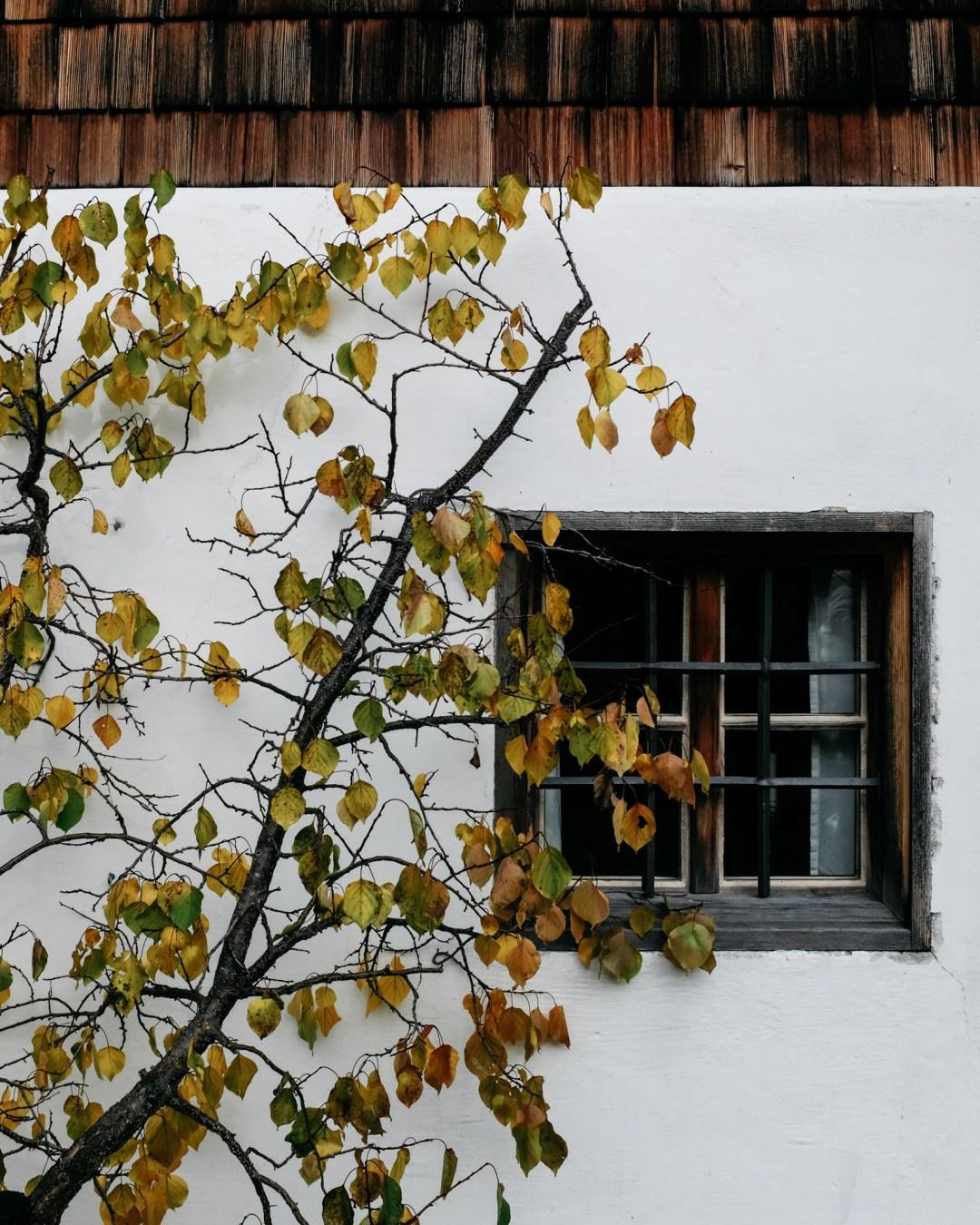 DSCF0471.herbstliebe autumnlover salzburgerland