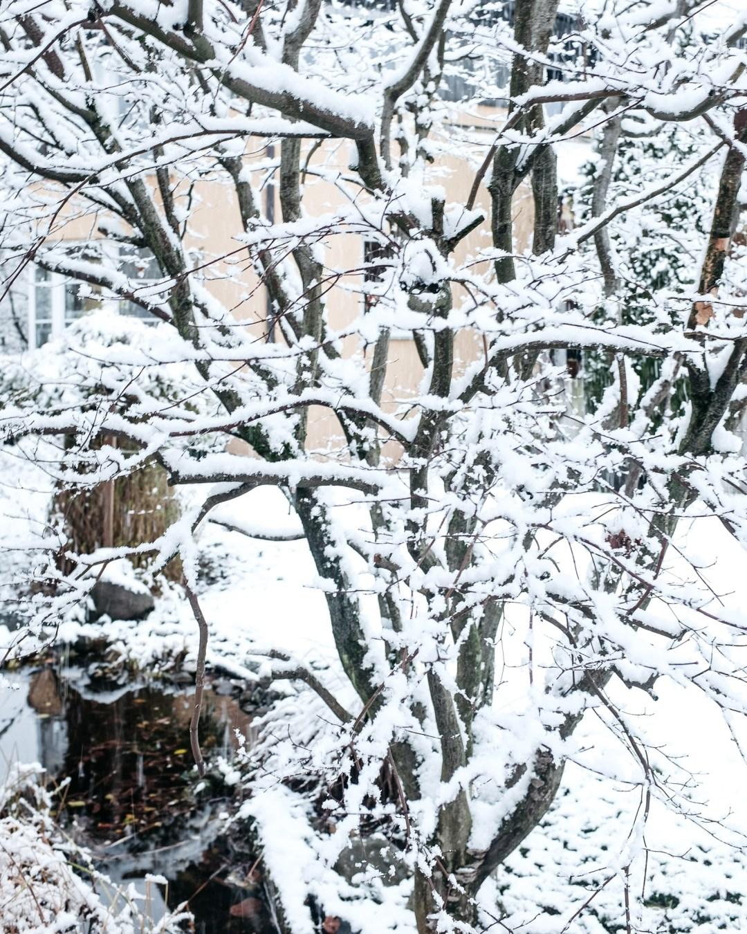 ina stil inastil advent keksebacken garten schnee wintergarten gartenteich gartenliebe winterzauber winterwonderland christmastime weihnachtszeitDSCF0652