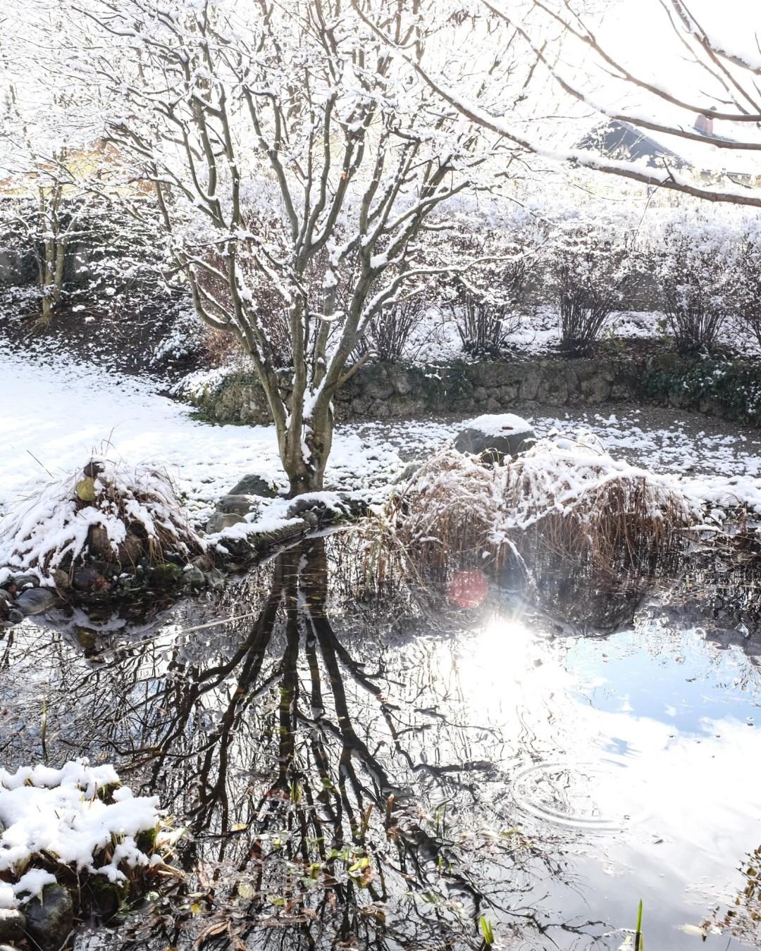 ina stil inastil advent keksebacken garten schnee wintergarten gartenteich gartenliebe winterzauber winterwonderland christmastime weihnachtszeitDSCF0690
