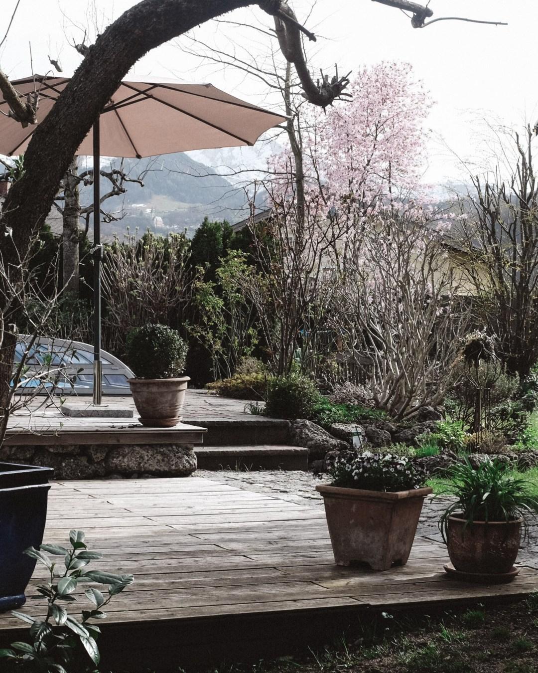 inastil, Frühlingsgarten, Teich, Magnolien, Frühlingsblüher, Lachs, Spargelrezept, Mangosalsa, Lowcarb, leichtes Abendessen, Ü50Blogger-2