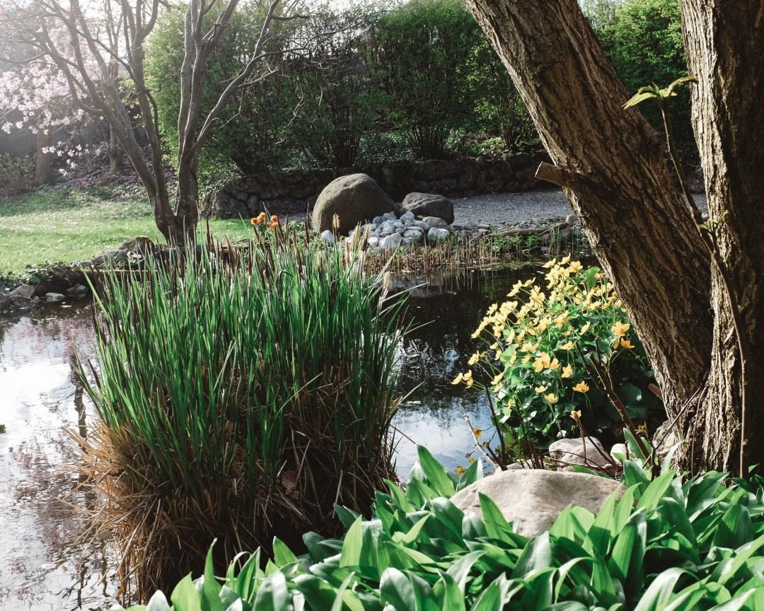 inastil, Frühlingsgarten, Teich, Magnolien, Frühlingsblüher, Lachs, Spargelrezept, Mangosalsa, Lowcarb, leichtes Abendessen, Ü50Blogger-7
