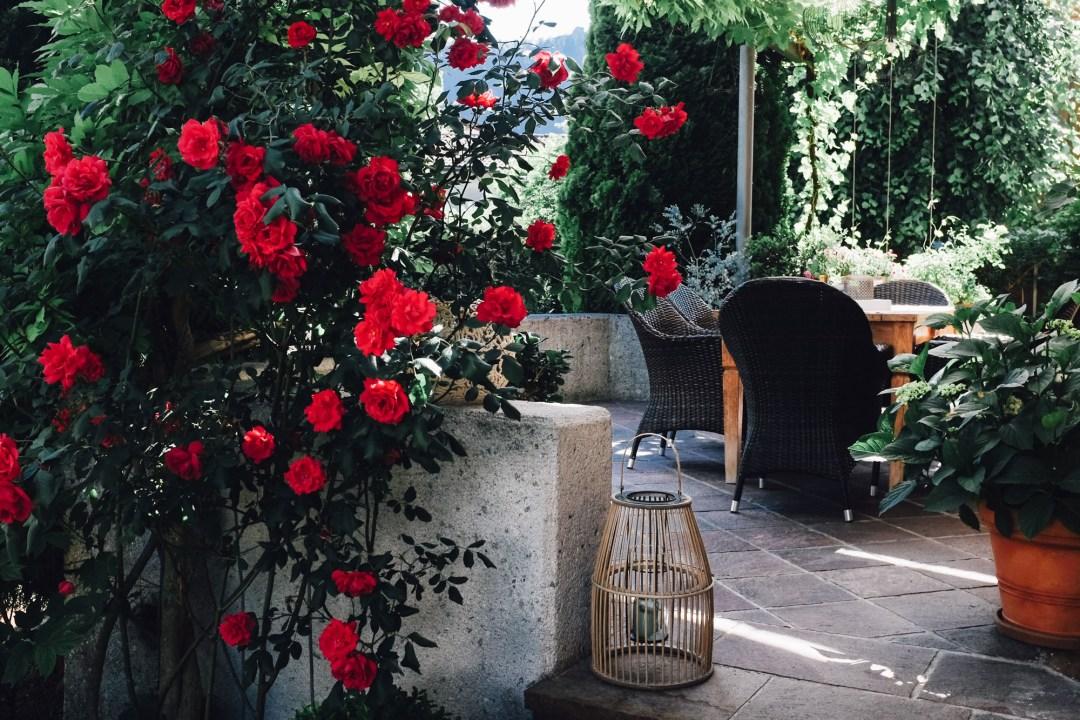 inastil, over50blogger, rosen, historische rosen, garten, sommergarten, rosengarten, gartenliebe, holler, holunder, holundersirsup, hugo, sommerabend, rosenliebe, haus und garten,
