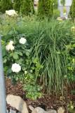 Dekogras und Rosen kombinieren sich gut