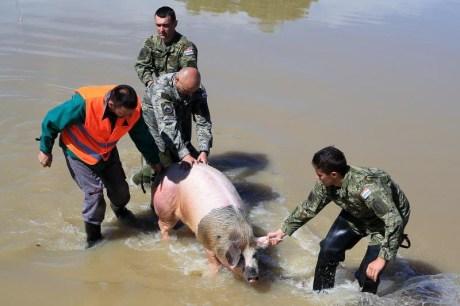 Floods Croatia 30