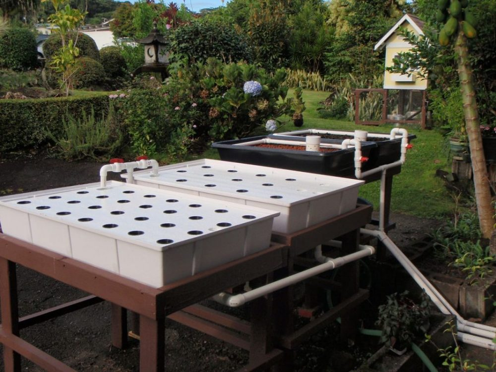 Backyard Aquaponic Grow Bed