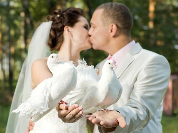 Walters weiße Hochzeitstauben
