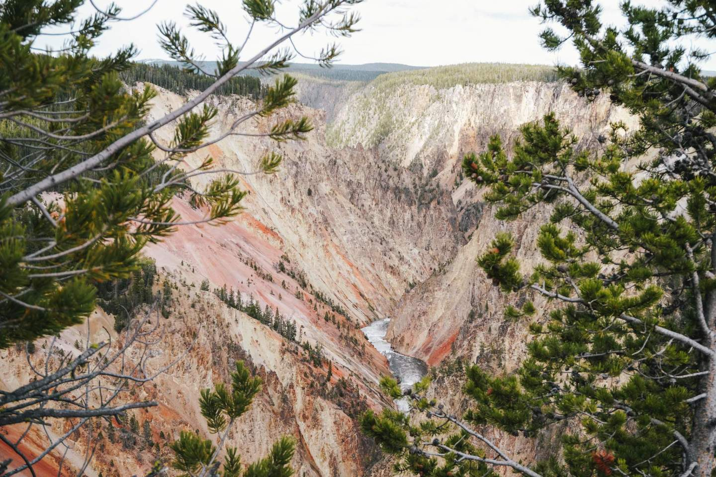 Grand Canyon of Yellowstone_22