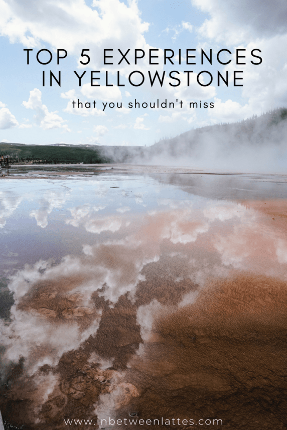 TOP 5 EXPERIENCES IN YELLOWSTONE THAT YOU SHOULDN'T MISS_ IN BETWEEN LATTES