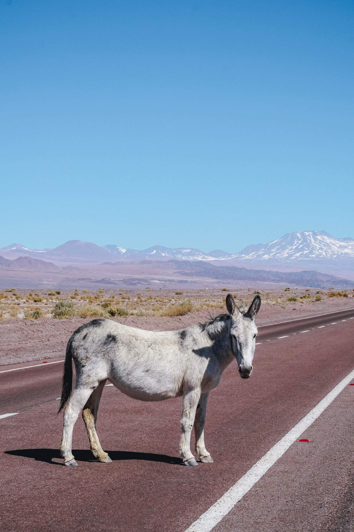 Self-driving guide-to-Atacama-Desert-itinerary-must-see-spots-14