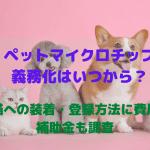 ペットのマイクロチップ義務化はいつから?犬猫への装着・登録方法に費用や補助金も調査