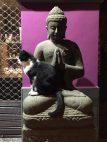 Katze auf Buddha