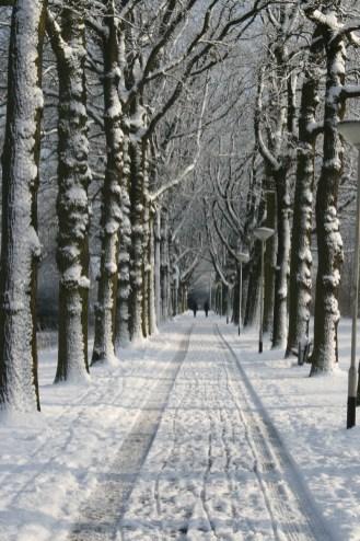 Bomenrij in de sneeuw