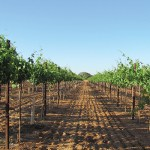 Arizona's Growing Wine Industry