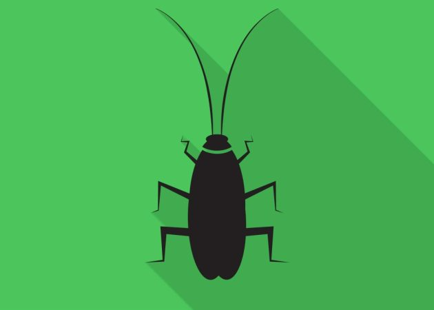It's Time Startups Focus On Going The Cockroach Way