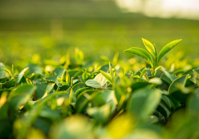 Ankur Capital Backs Carmel Organics, Expands Its Agritech Portfolio To 7 gritech-omnivore partners-fund