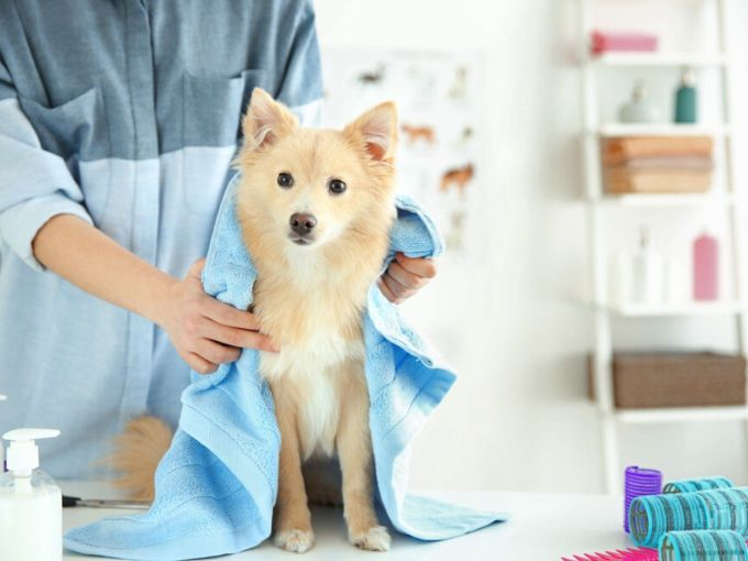 Pet Care Startup Wiggles Raises $1 Mn, Plans To Expand Its Footprint