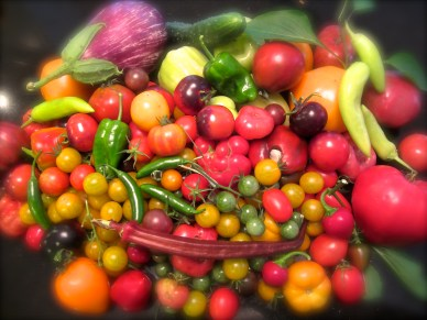 BIG Harvest