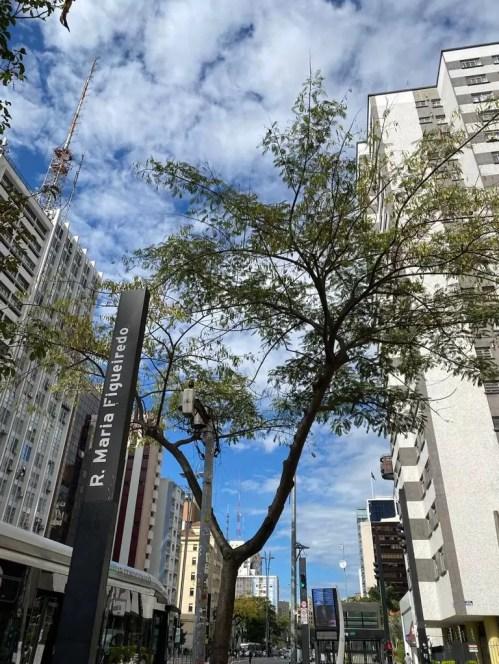 Rua Maria Figueiredo