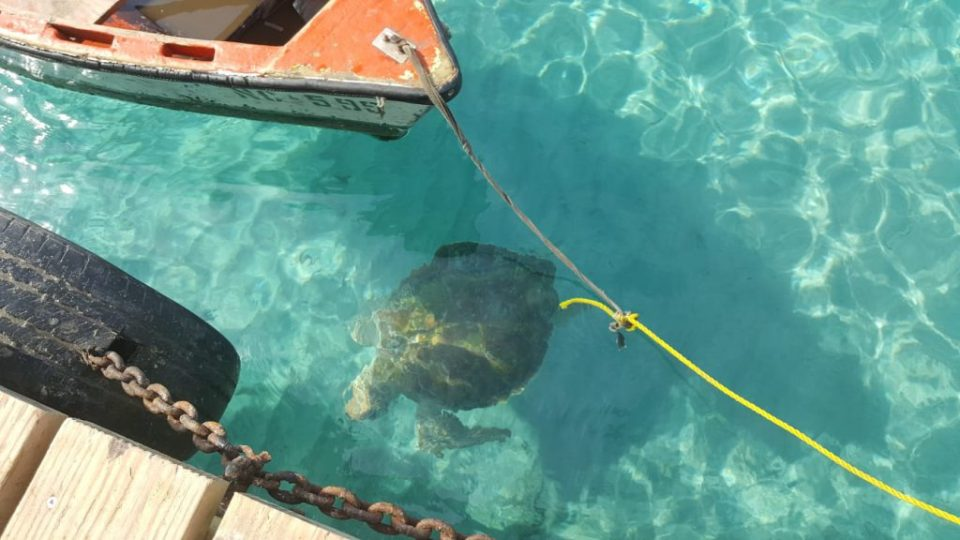 playa grandi turtle and boat