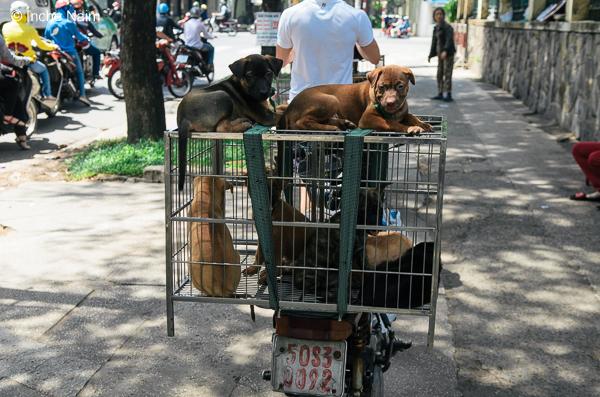 Bagpack Bajet Ke Ho Chi Minh