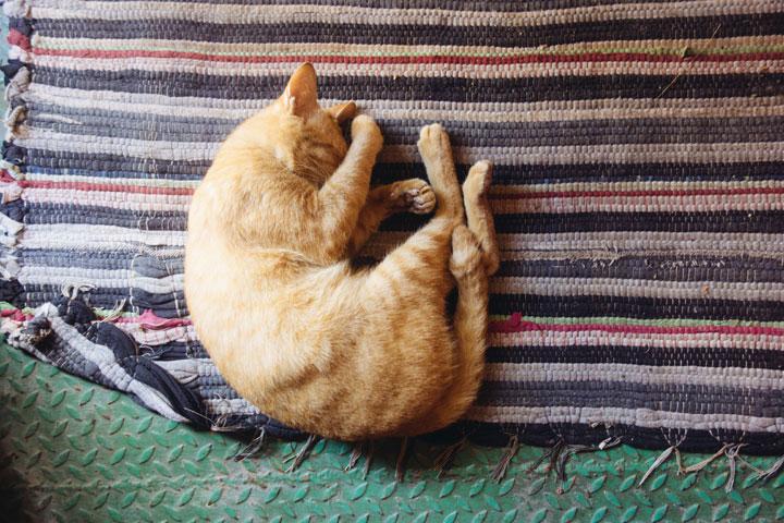 kepentingan tidur