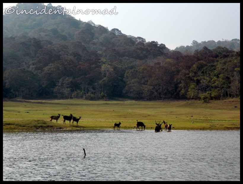 Thekkedy – Jewel of Idukki!!