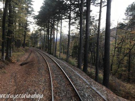 Treno del foliage Vigezzina Centovalli